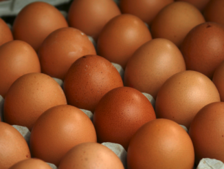 eggs are best source of protein
